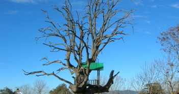 A deserted tree at Chail Cricket Ground