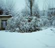 Manali – Kufri – Narkanda Gets First Snowfall of Winter 2011-12