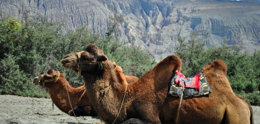 Exploring Hunder and Deskit – Nubra Valley   Ladakh – 2012