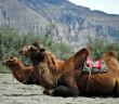 Exploring Hunder and Deskit – Nubra Valley | Ladakh – 2012