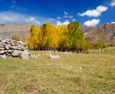 Srinagar to Leh Bus Service – Timings, Rates & FAQs