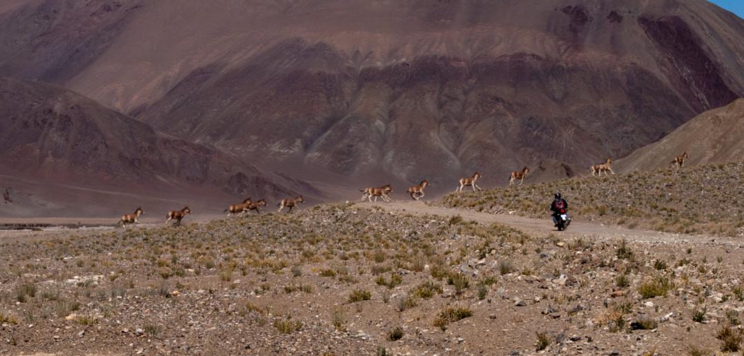 Prologue, Itinerary & Road Updates | Ladakh Mega Meet