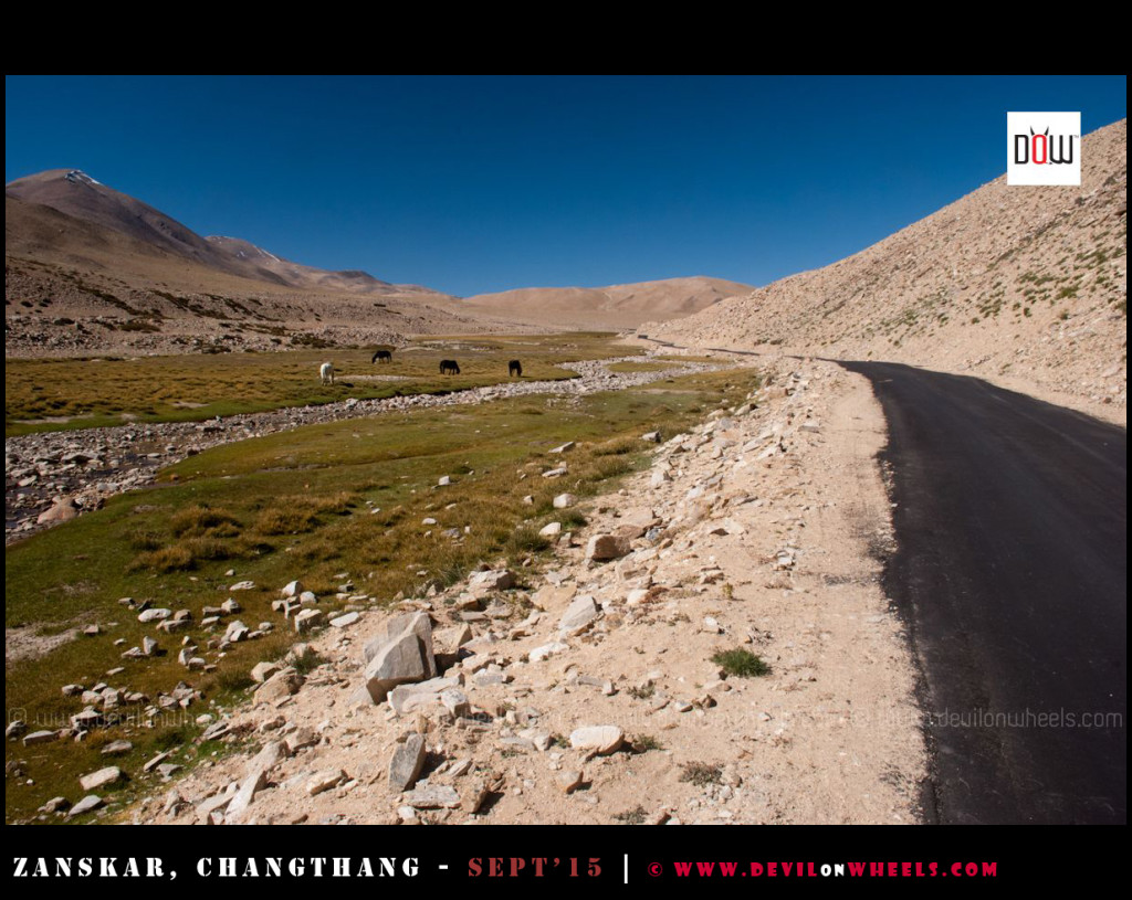 The wilderness of Changthang