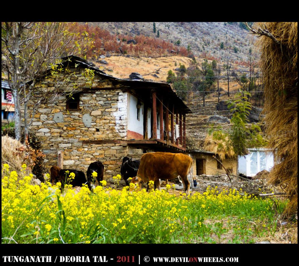 Sari Village - Base of Deoriatal