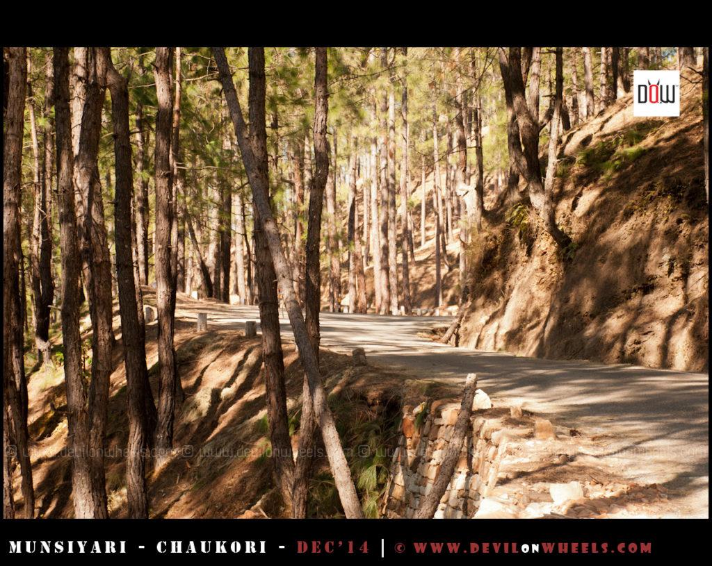 Driving through the jungles of Kumaon