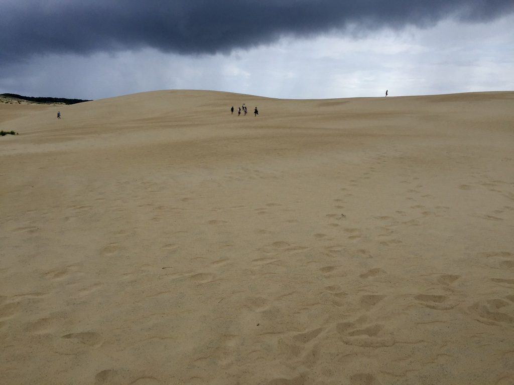 Sand Dunes of Jockey's Ridge State Park