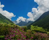 Valley of Flowers Trek – A Travel Guide
