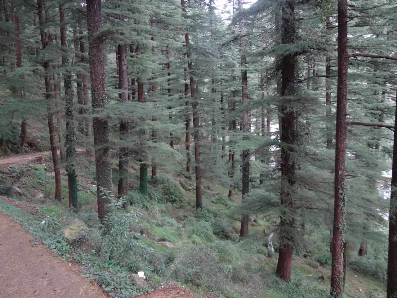 Trail to Dharamkot from Mcleodganj