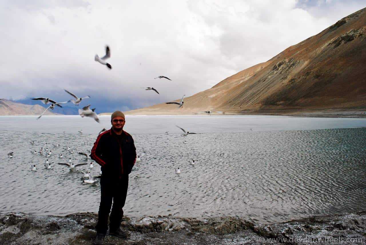 When the seagulls run from the devil at Pangong Tso