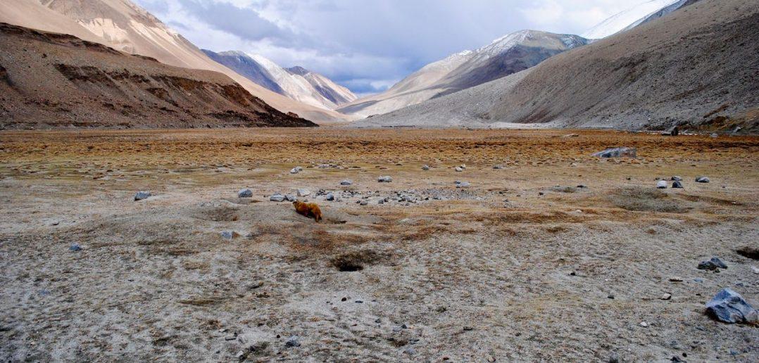 The boundless beauty of Ladakh near Tangtse
