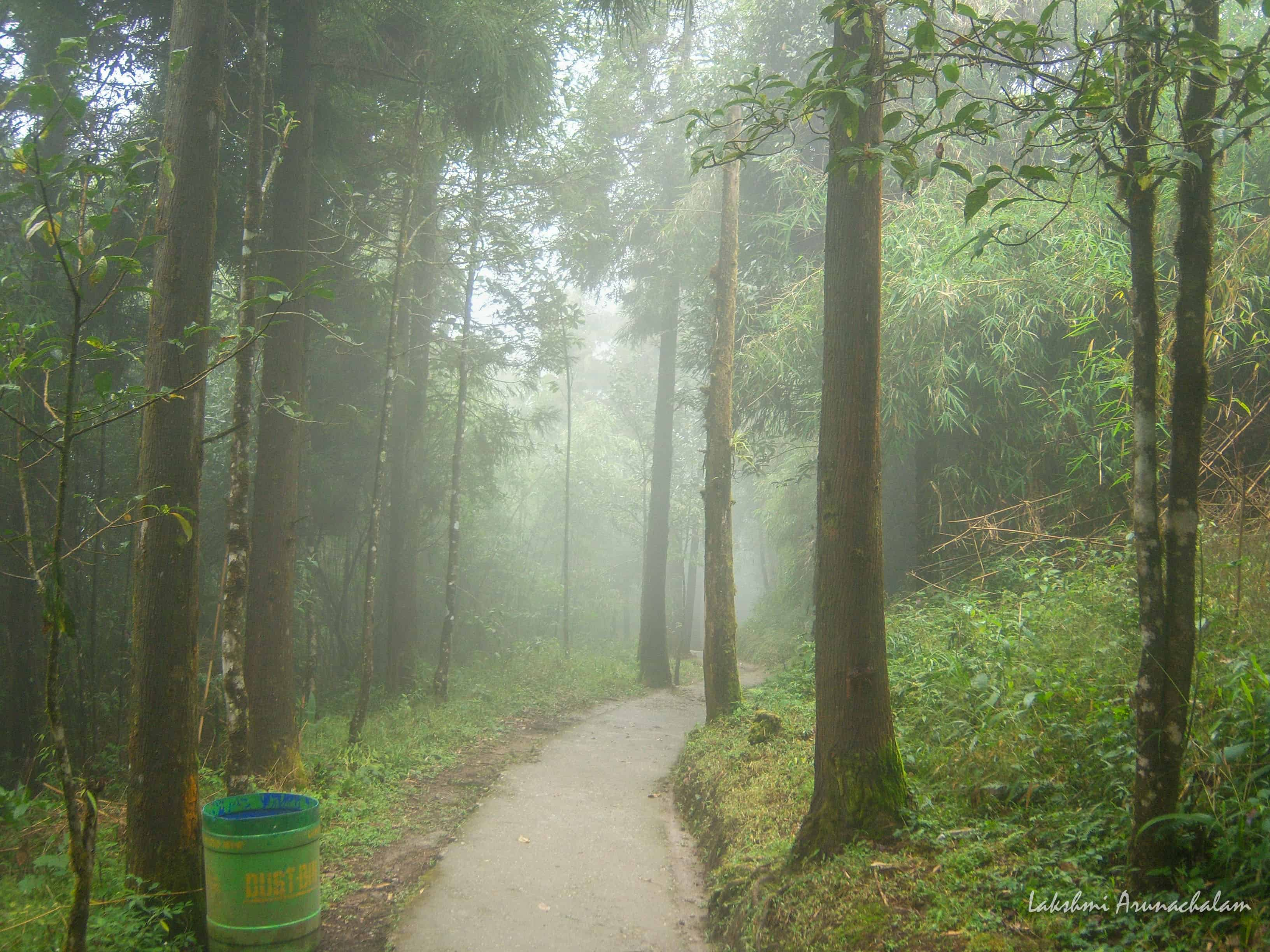 Misty Walks around Zoological Park, Gangtok