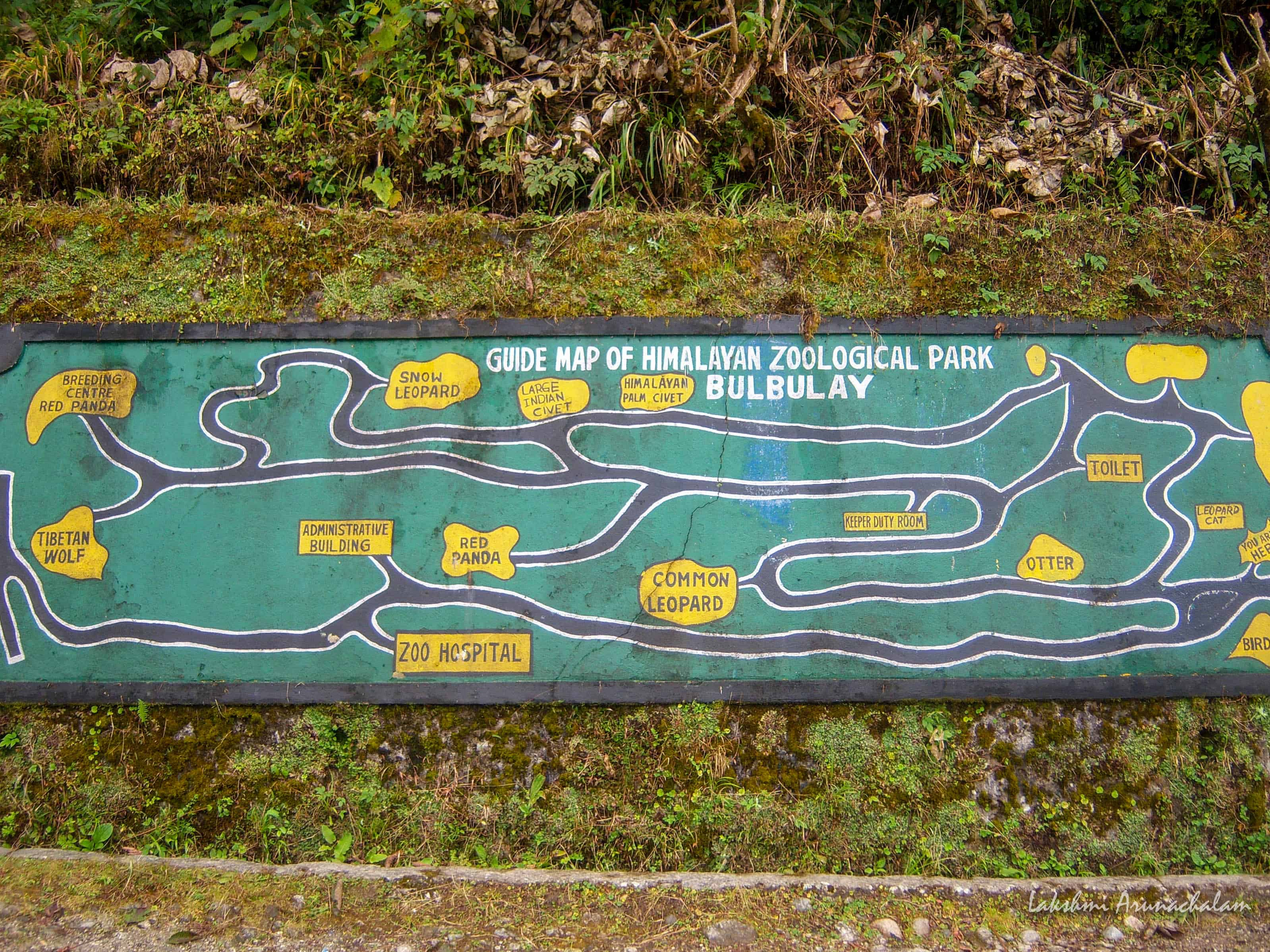 Pathways of Zoological Park, Gangtok