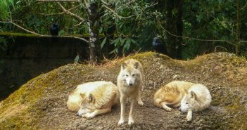 Himalayan Zoological Parks – An attempt to introduce wildlife to tourists