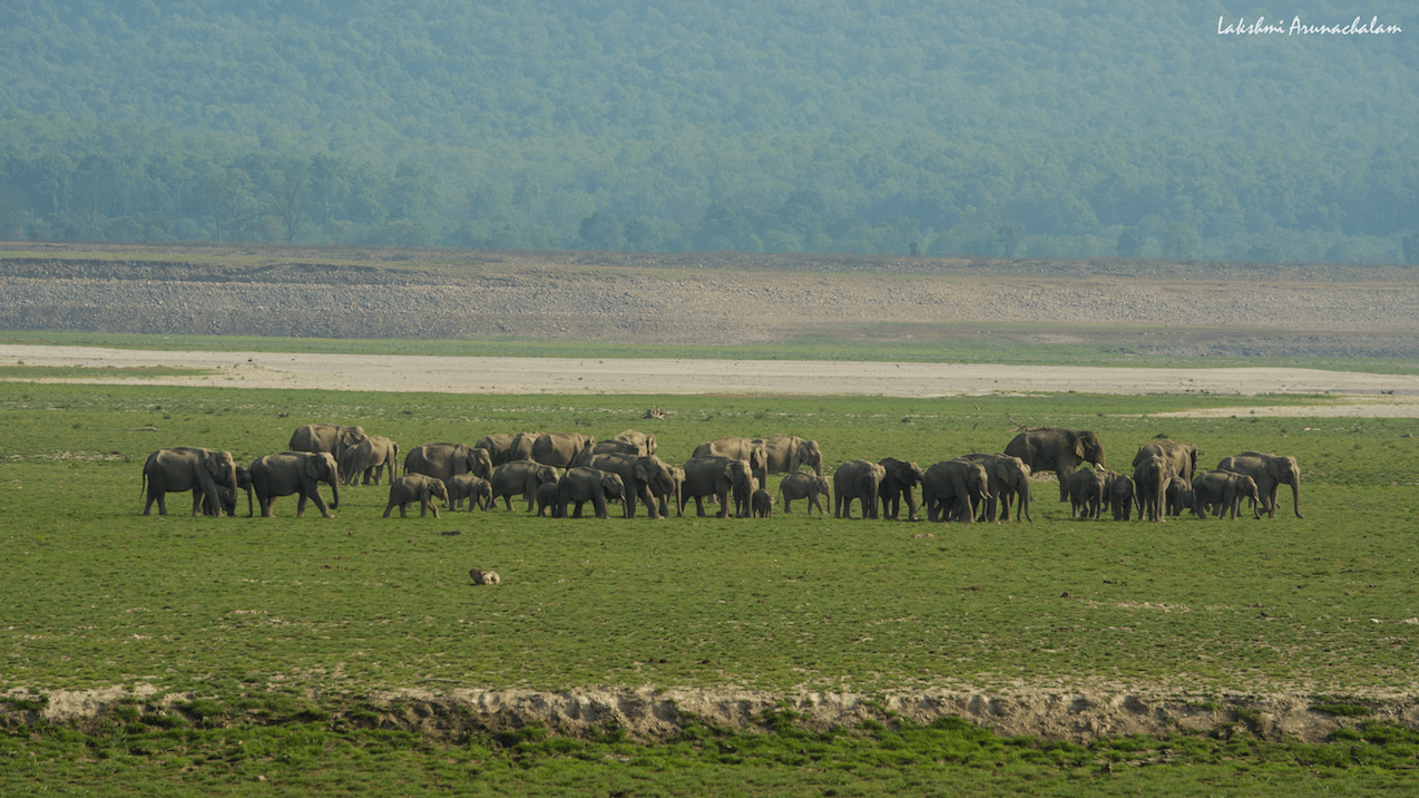 Elephant Landscape of Jim Corbett National Park