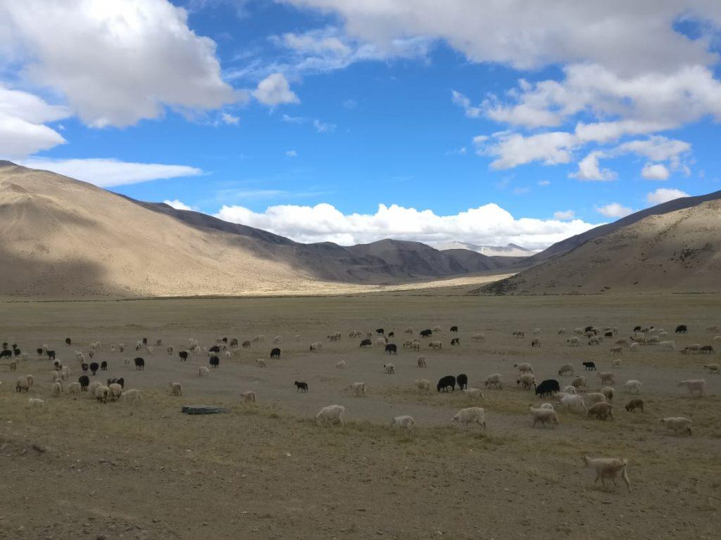 More Plains on Manali Leh Highway