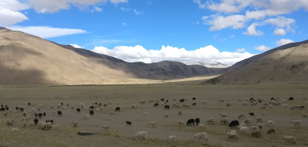 More Plains on Manali Leh Highway