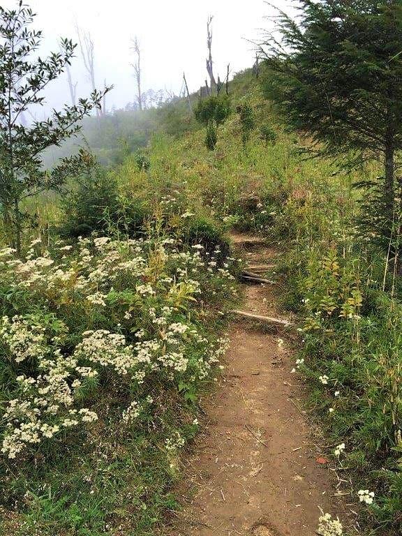 The trekking trail Sandakphu-Srikhola
