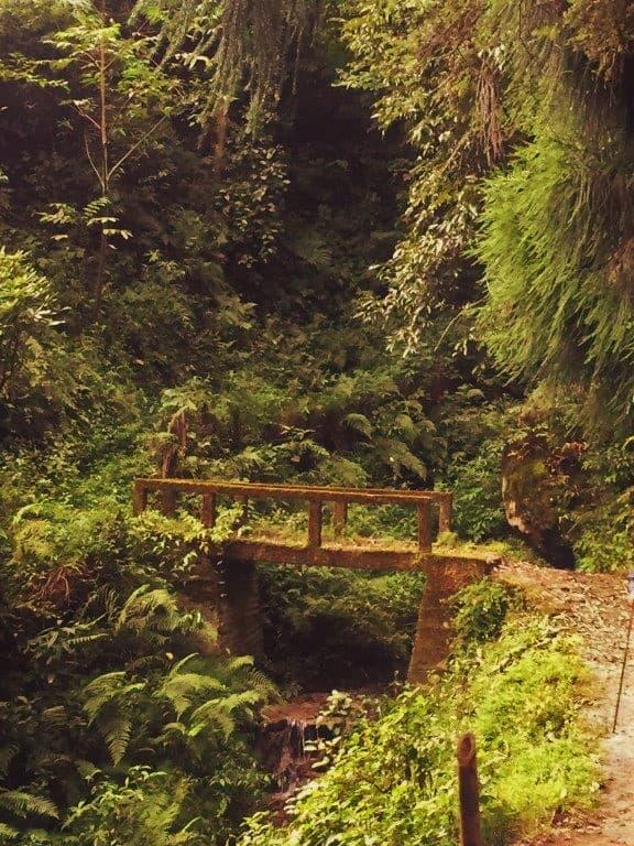 The impromptu little bridges Gurdum-Srikhola
