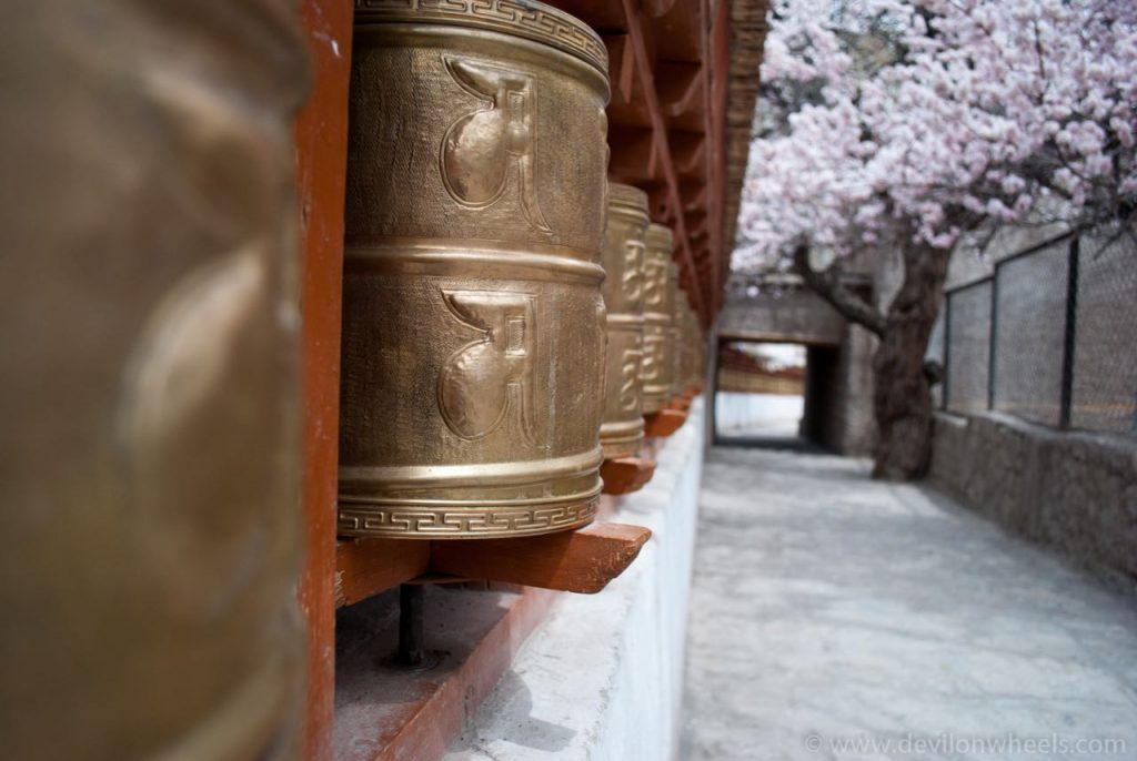 Prayer Wheels & Alchi Tree in background