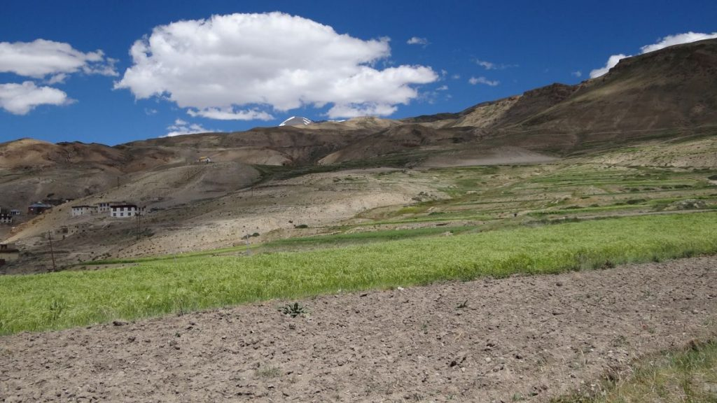 Marine fossils are found at Kibber Village too, besides Langza in Spiti Valley