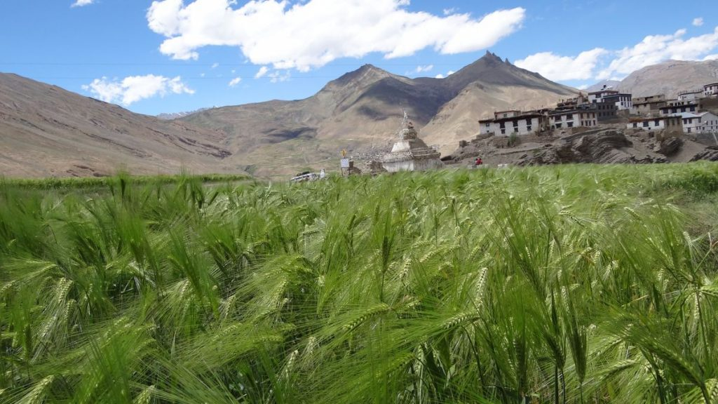 Kibber village fields and temple Spiti valley