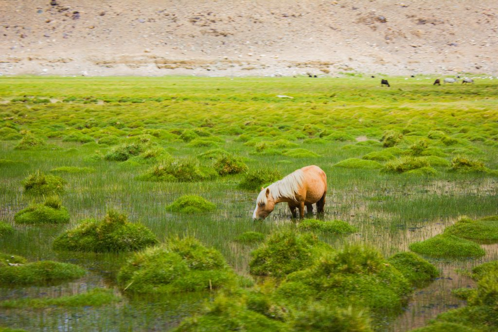 Meet Wildlife - wetlands near Tangtse