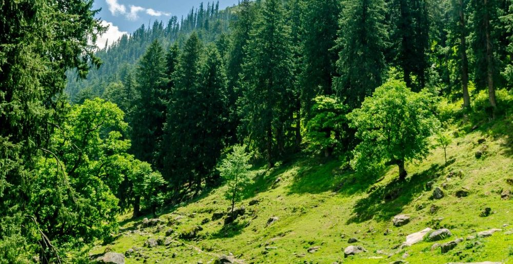 Deep into the Parvati Valley