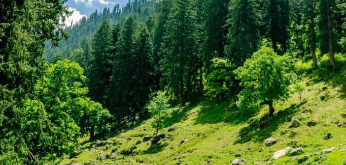 Kheerganga Trek – A Complete Travel Guide for Beginners