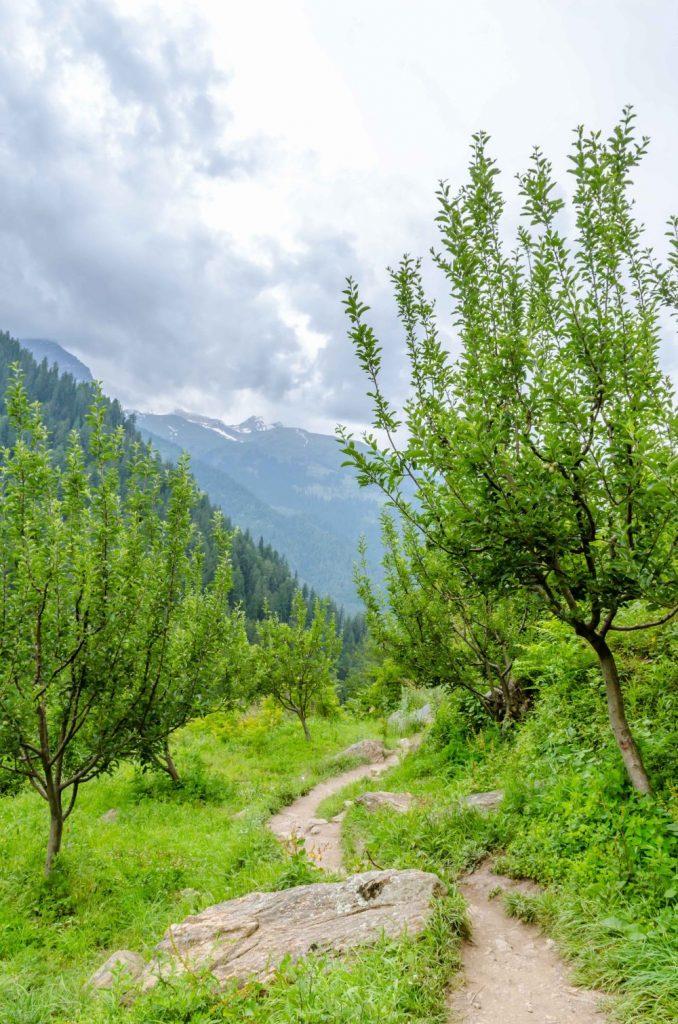 Views on the Kheerganga Trek