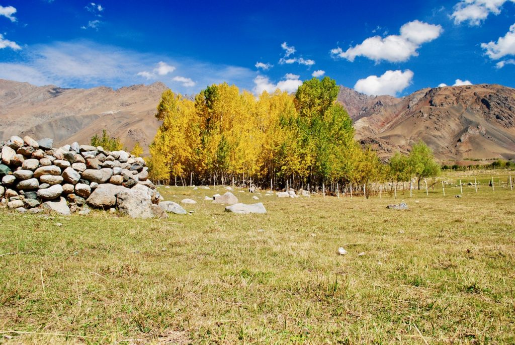 Autumn colors on Srinagar Leh Highway