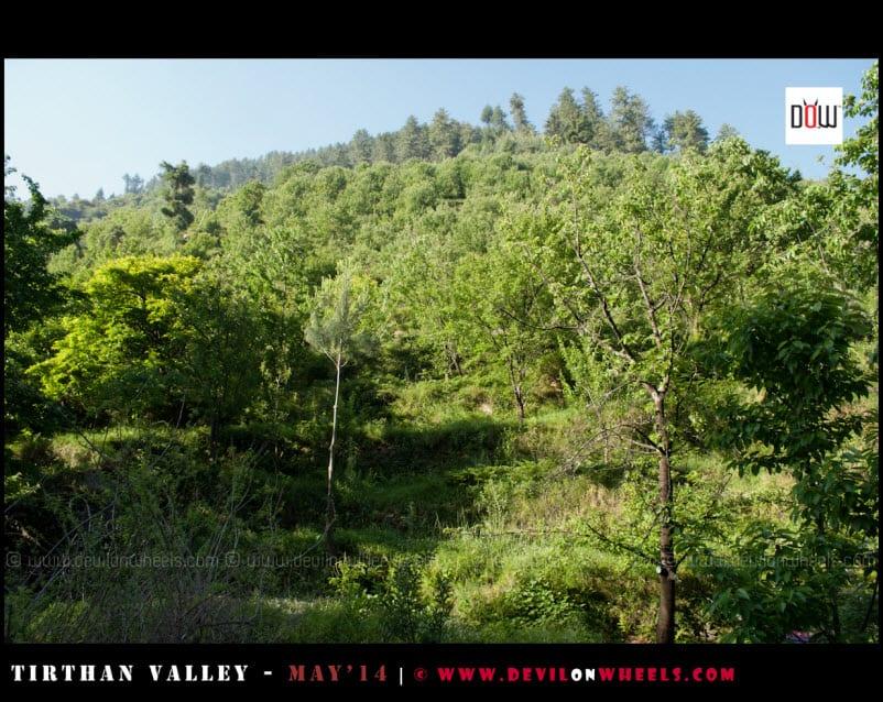 Greenery around Raju's Cottage
