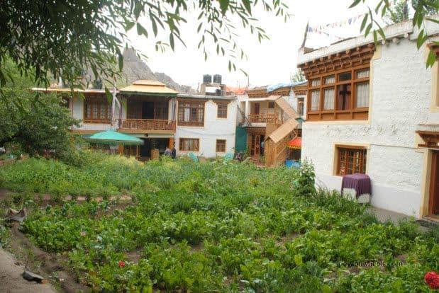 Garden at Hotel Chubi or Hotel Chube, Leh, Ladakh