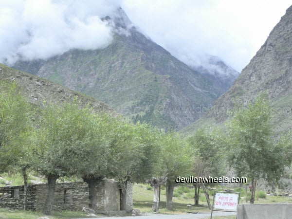 Trees at Tandi on Manali – Leh Highway