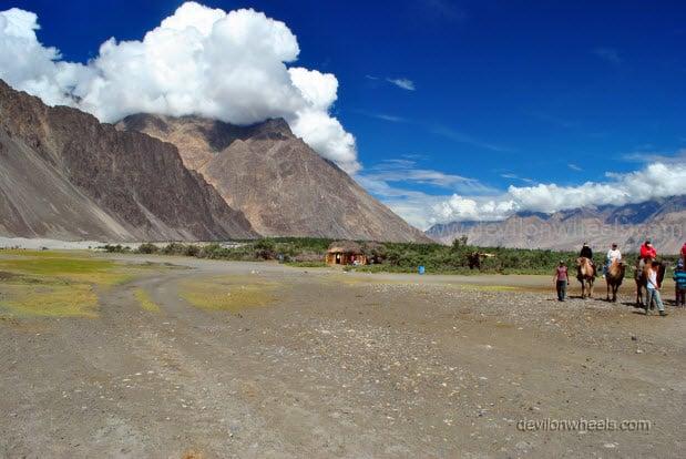 Camel Safari in Hunder, Nubra Valley in Leh - Ladakh