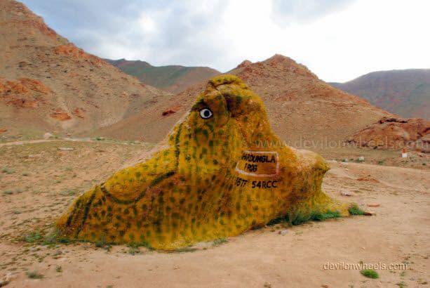 Khardung La Frog in Leh - Ladakh