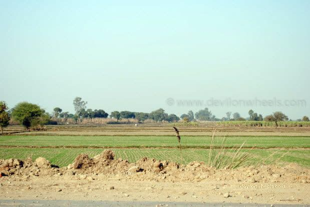 Green Farms enroute Bikaner