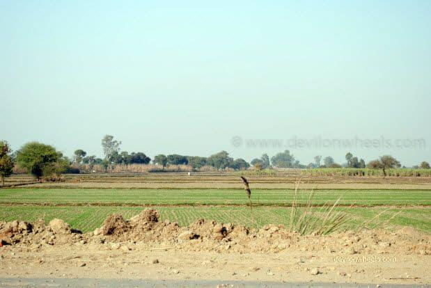 Green Farms enroute Bikaner