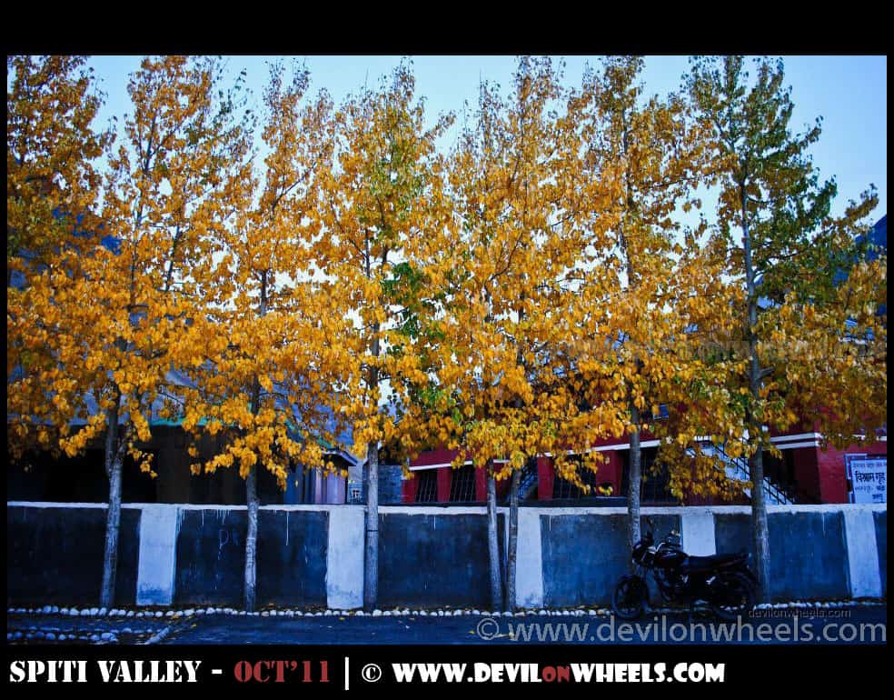 Colors of Fall or Autumn in Pin Valley