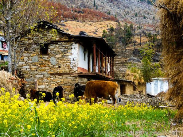 A view of Sari Village