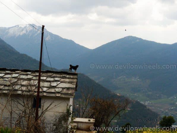 A dog at Sari Village