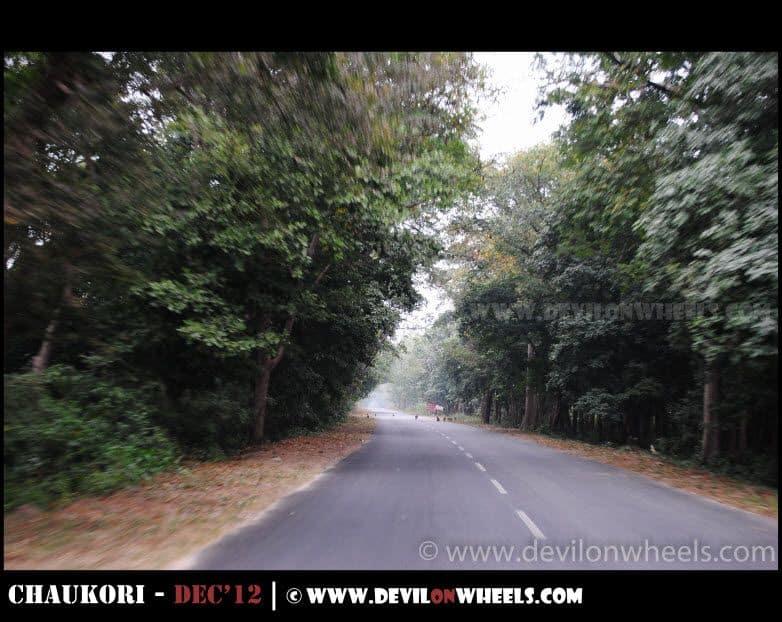 Lots of Monkey near Kaladhungi on road to Nainital