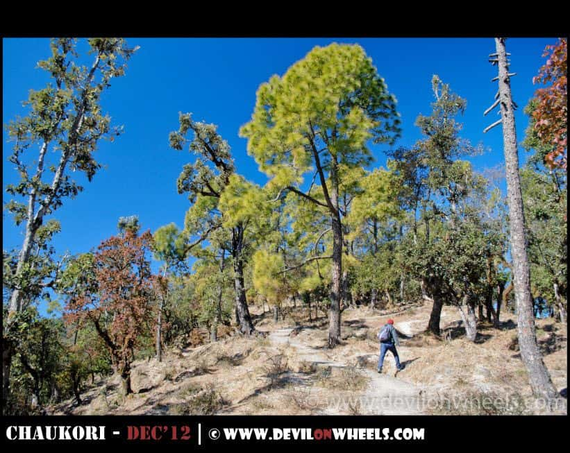 The Hike to Musk Deer Park at Chaukori