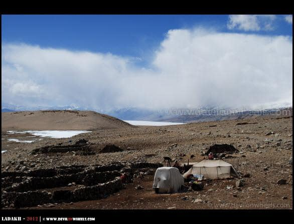 Nomads of Changthang... The Changpas...