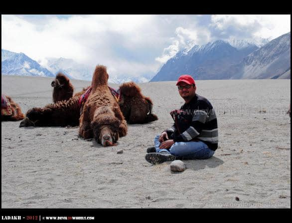 Dheraj sharma with Double Humped Camel in Hunder Village - Nubra Valley, Ladakh