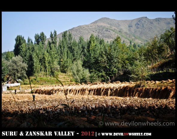Greenscapes on Srinagar Kargil Highway | Zanskar 2012