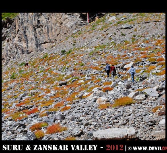 Hiking our way to Zongkhul Monastery in Zanskar Valley