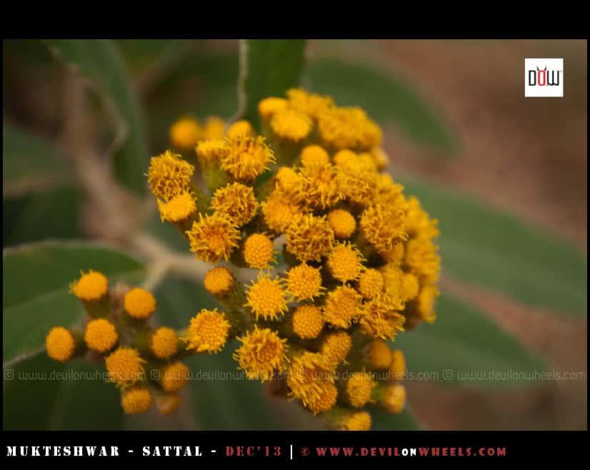 Flora on the trek to Vankhandi Aashram