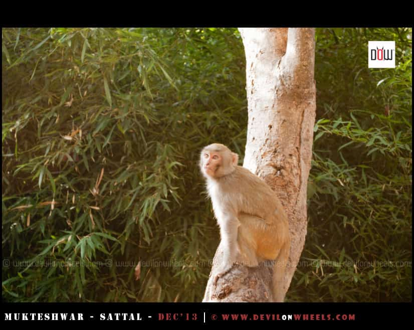 Monkeys at the Aashram