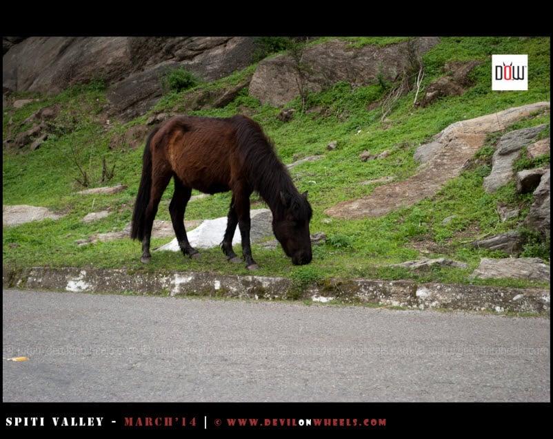 Horses Grazing Around on NH-22