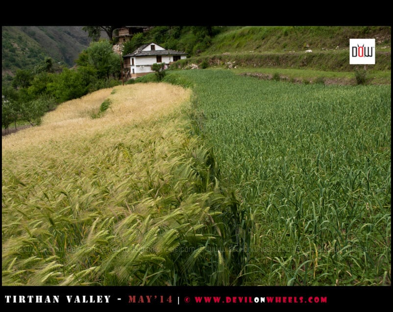 Different shades of Green in Tirthan Valley